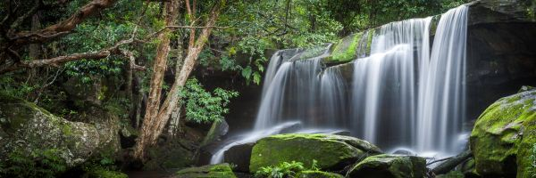Photographs of Forests and Waterfalls