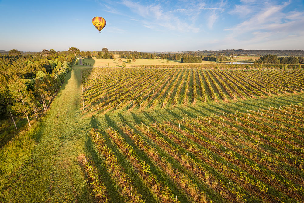 Ballooning over the Vineyards, Hunter Valley