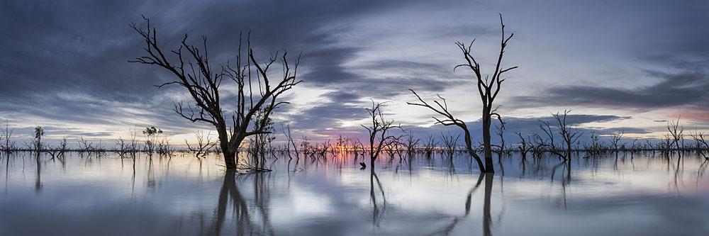 Sunrise at the submerged forest at Lake Pamamaroo, Menindee Lakes