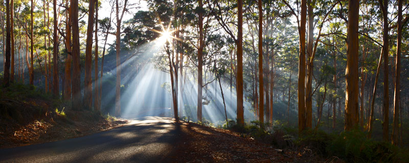 Sun Burst, Boranup Forest, Margaret River